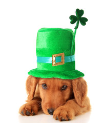 Irish Shamrock uppy