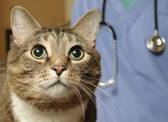 Cat visits the vet