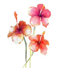 Red Hibiscus flowers watercolor painting