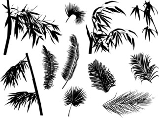 palm and bamboo branches silhouettes isolated on white