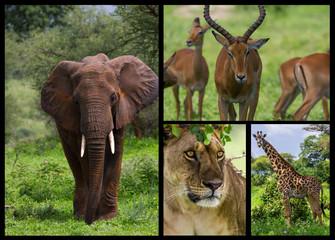 Medley africain
