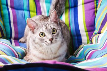 lounger cat