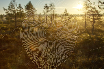 Spider Web and Sunset
