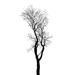 Leafless tree silhouette isolated on white background