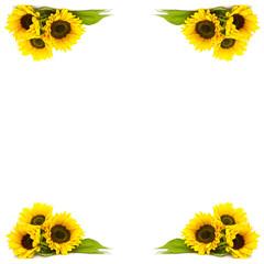 frame of sunflowers