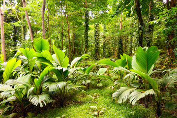 Tropical rain forest in Mahe Island, Seychelles