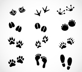Animal and human footprint set vector
