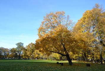 Autumn park Mikhailovsky Garden.