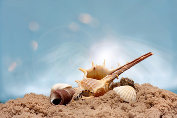Shells on sandy beach. sun and sky. Macro