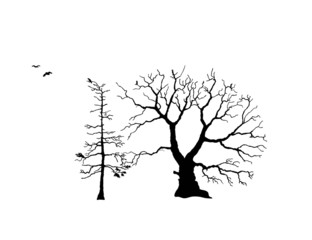 Trees with ravens