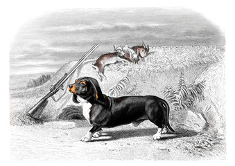 Victorian engraving of a hound.