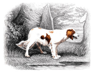 Victorian engraving of a dog.