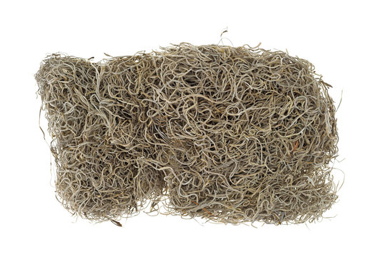 Block of Spanish moss for crafts
