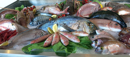 great white sea bream many saltwater fish fresh