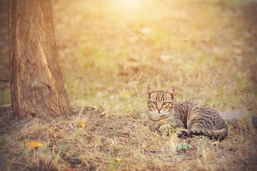 Cat resting on a sunny day