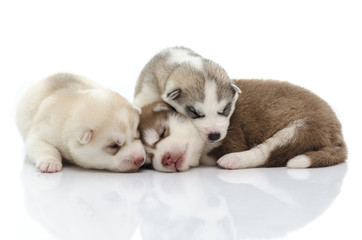 Three siberian husky puppy sleeping