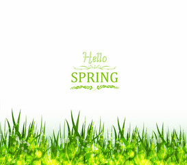 hello spring background with grass