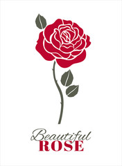 Red rose on white. Vector