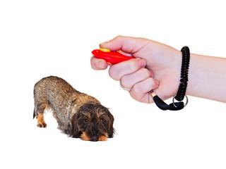 Hundeerziehung mit einem Clicker