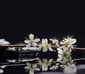 Branch with blossoms with candle