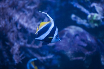 Fish in an aquarium with a coral reef