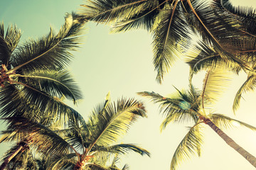 In de dag Palm boom Coconut palm trees and shining sun over bright sky