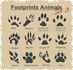 Footprints Animals - vector set.