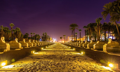 Alley of the Sphinxes in Luxor - Egypt