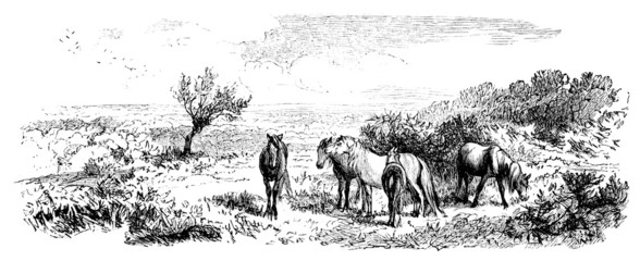 19th century engraving of a scene the New Forest National Park