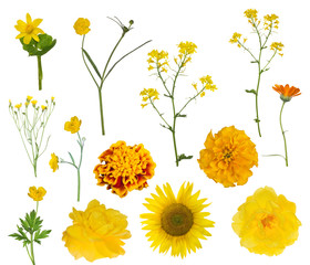 thirteen yellow isolated flowers collection