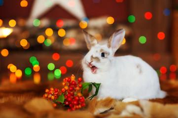 rabbit in the studio
