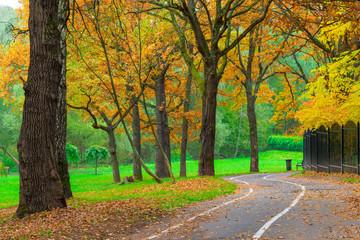 empty jogging track in the autumn park