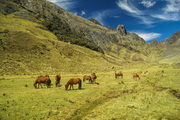 Aluminium Prints Grocery Peruvian Andes