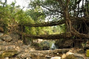 Old root bridge in India