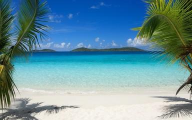 Tropics, Beach, Palm Trees