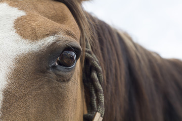 Brown Eye of Old horse