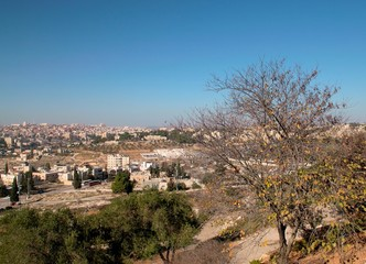 Aerial view of Jerusalem city with tree on foreground