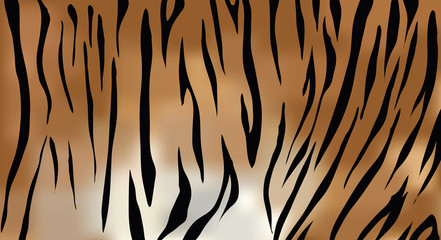 Tiger fur texture vector