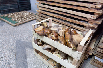 mushroom storage crates