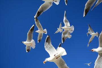 simit ekmek peşinden uçan martılar