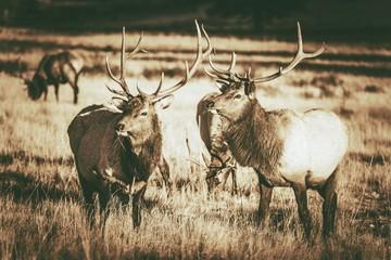 Wall Mural - Colorado Elks Gang