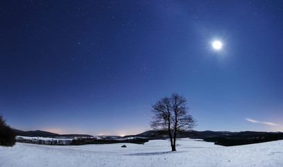 Tree panorama at winter night