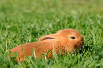 Little rabbit on green grass