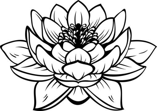 Lotus (nelumbo) flower. Vector tattoo illustration