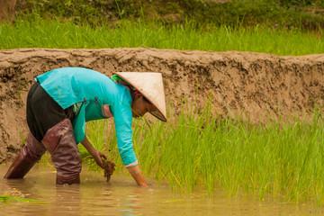 Wall Mural - Farmer in Sapa, Lao Cai Province, Vietnam