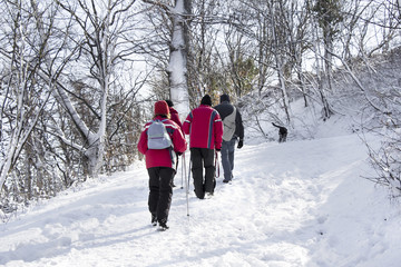 Walking on the snow forest