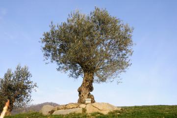 Un albero e l'arnia
