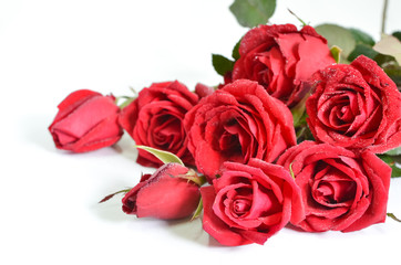 Background valentine. Red roses
