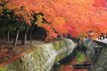 紅葉の京都哲学の道