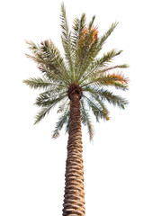 Palm tree with a long barrel. bottom up view.